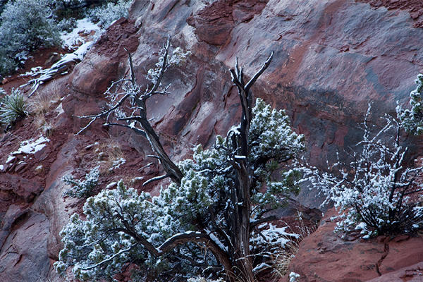 Coconino National Forest, no. 39, Sedona, AZ 2011 © 2016 Megan W. Delaney, MegansPhotoImages, LLC : Landscapes, Nature : Megan W. Delaney Photography